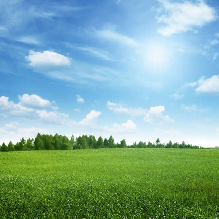 field: Beautiful summer landscape. Stock Photo