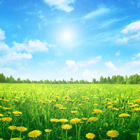 ensolarado: Sunlight in blue sky spring field.