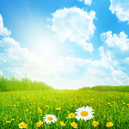 buttercup: Field of spring flowers and sun on blue sky. Stock Photo