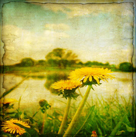 Yellow dandelions near lake in grunge and retro style.  Stock Photo