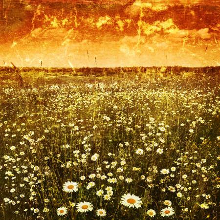 campo de margaritas: Daisy campo al atardecer en el grunge y el estilo retro Foto de archivo