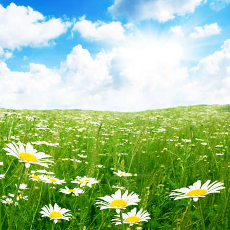 Daisy field,blue sky and sun   Stock Photo - 12466787