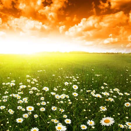 Flower field at sunset Stock Photo - 12466807