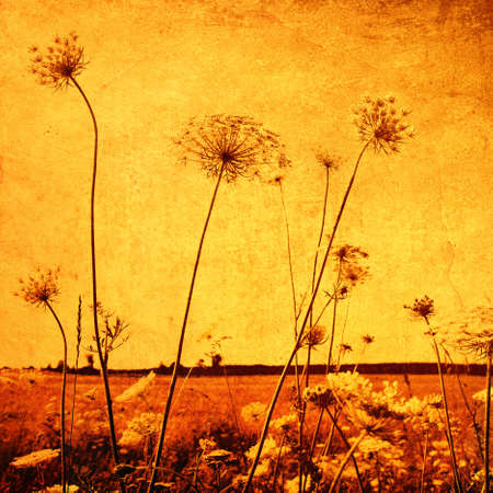 Flower field in retro and grunge style  photo