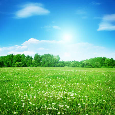 Summer field with dandelions and sun in blue sky