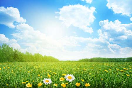 dia soleado: Verano prado en día soleado
