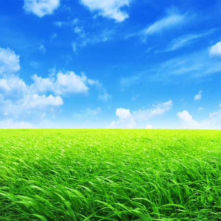 Field of green grass and bright blue sky  photo