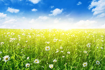 Flower field on sunny day Stock Photo - 12903054