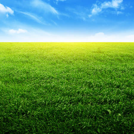 Field of green grass and bright blue sky