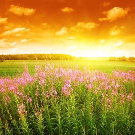 Summer field at sunset