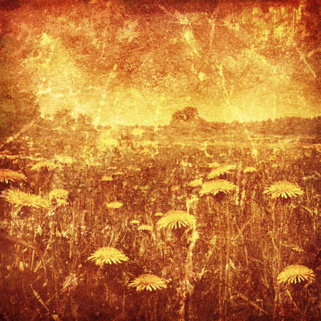 Dandelion field at sunset in grunge and retro style  photo