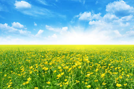 Spring meadow,blue sky and sun  Stock Photo - 13013421