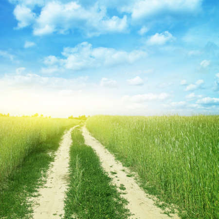 Country road in wheat field and sunlight  Stock Photo - 13013419