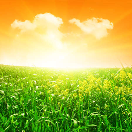 Green field in the evening. Stock Photo