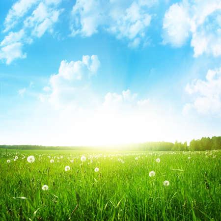Campo di dente di leone, cielo blu e sole