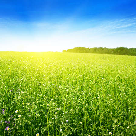 Field in summer and sun in blue sky Stock Photo - 13060999