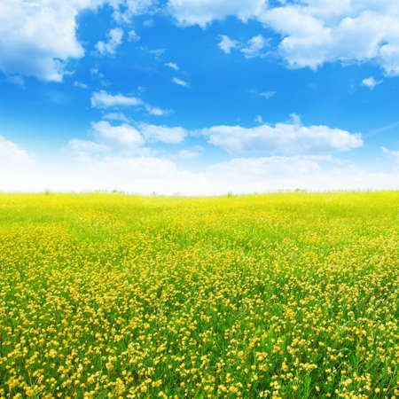 Yellow clover on summer meadow Stock Photo - 13060996