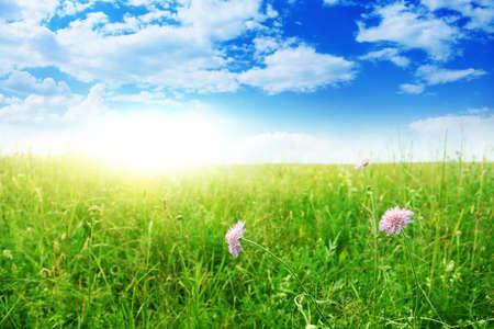 Summer field on sunny day Stock Photo - 13075913