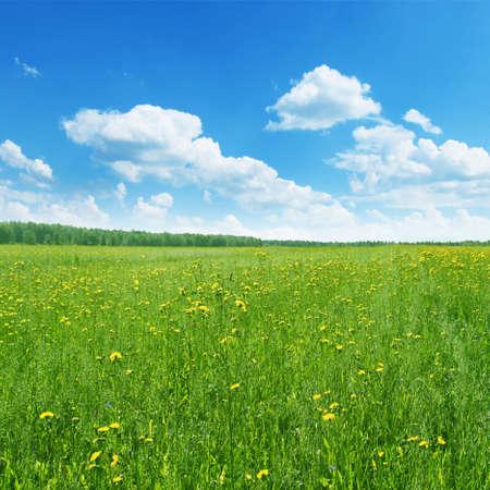 Field of wildflowers in summertime Stock Photo - 13075922