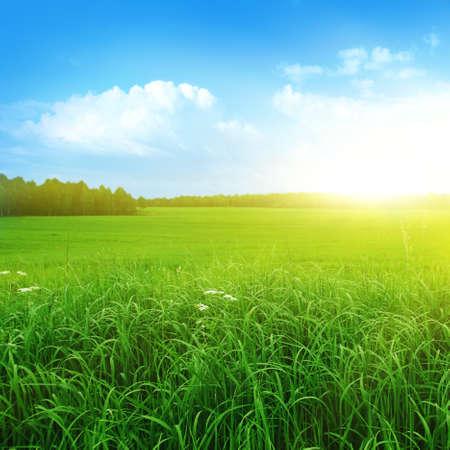 Morning landscape  Stock Photo - 13075998