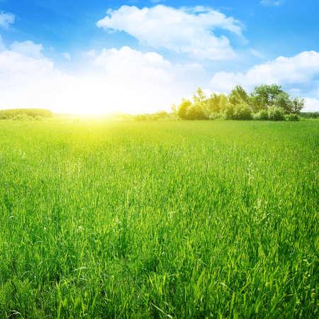 Sunny summer day  photo