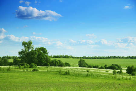 Summer landscape with trees under blue sky