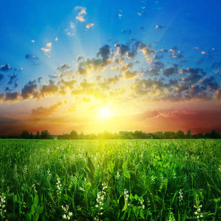 Colorful sunset over green field Stock Photo - 13133917