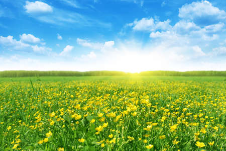 Flower field in spring time. Stock Photo - 13248602