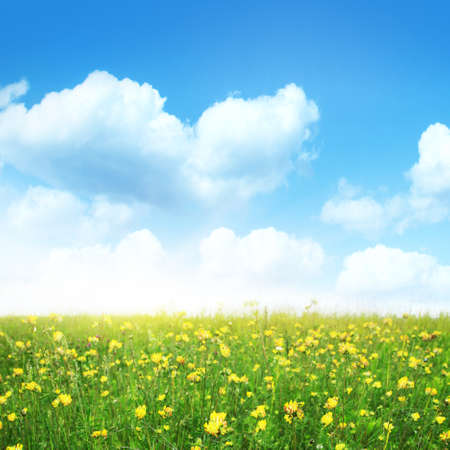 Summer meadow on sunny day  Stock Photo