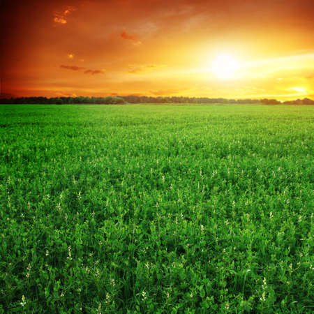 on pasture: Green field and sunset sky. Stock Photo