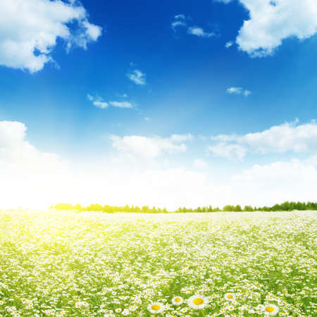 Daisy field,blue sky and sunlight. Stock Photo - 13248600