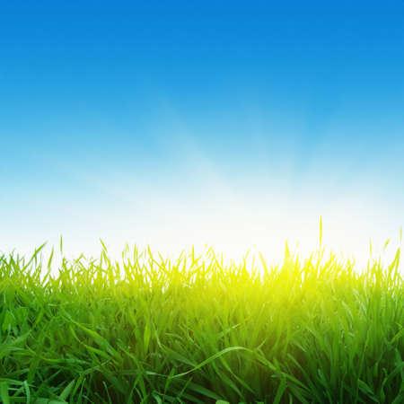 Green grass,blue sky and sun Stock Photo