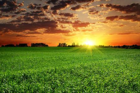 wschód słońca: Pole trawy i słońca jasny