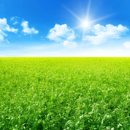 non cultivated: Green field and blue sky with sun