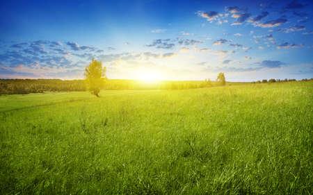 Champ d'herbe au crépuscule