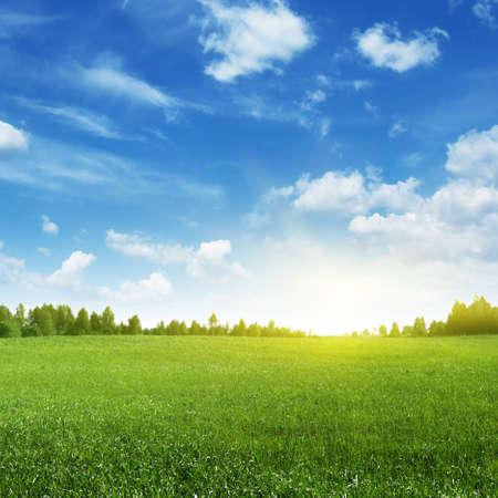 Groene veld en ochtendzon