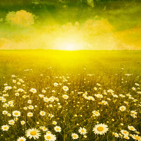 yellow wildflowers: Daisy field at sunset in grunge and retro style.