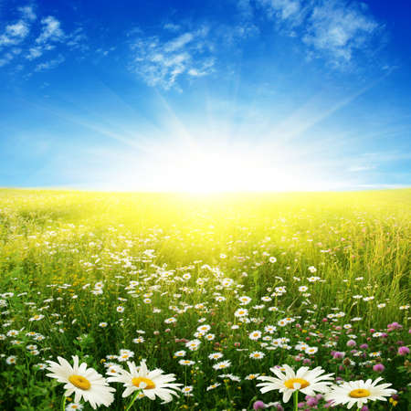 White daisies,blue sky and sun. Stock Photo - 13291942