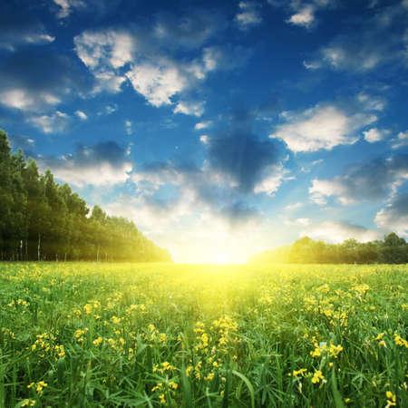 Blue sky,sun and yellow rape field