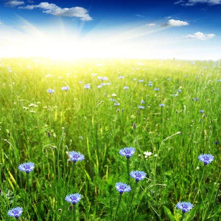 Summer field ,blue sky and sunlight  photo
