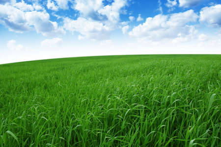 landscaped: Green hill under blue sky  Stock Photo