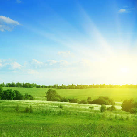 Green field,trees,blue sky and sun Stock Photo - 13411659