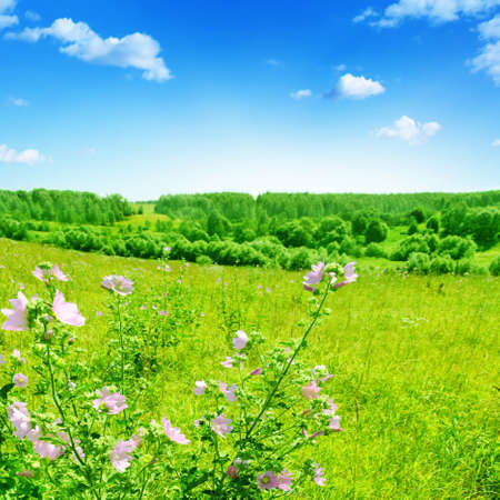 Field with pink wildflowers in summer time Stock Photo - 13411669