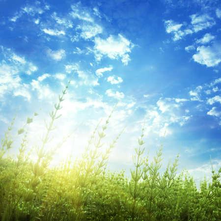 equisetum: Green plants and bright sunset  Stock Photo