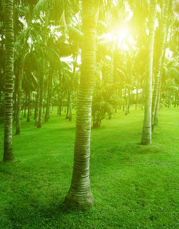 arboleda: Sunshine en el parque tropical