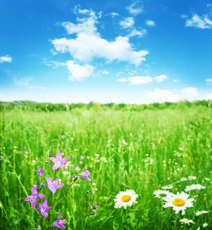 Field of summer flowers and blue sky   Stock Photo - 13411705