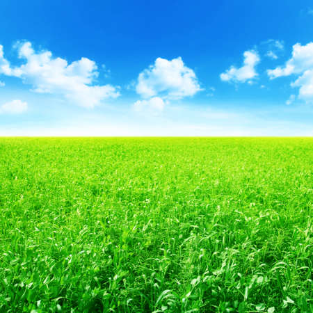 non cultivated: Green agricultural field and blue sky with clouds  Stock Photo
