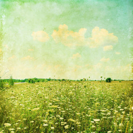 yellow wildflowers: Summer field in grunge and retro style