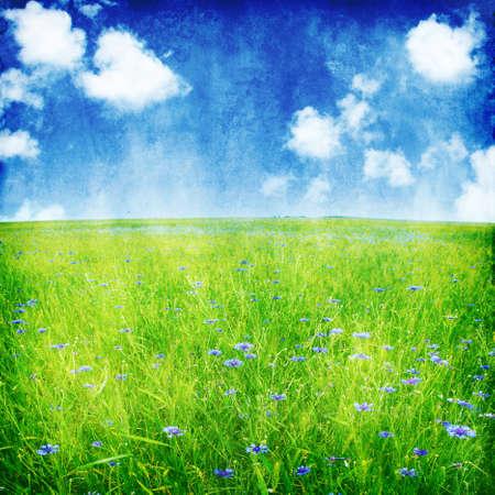 Cornflower: Summer field and blue cornflowers in grunge and retro style