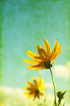Yellow wildflowers in grunge and retro style  photo